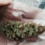 Перветин и марихуана – грустное чешское первенство