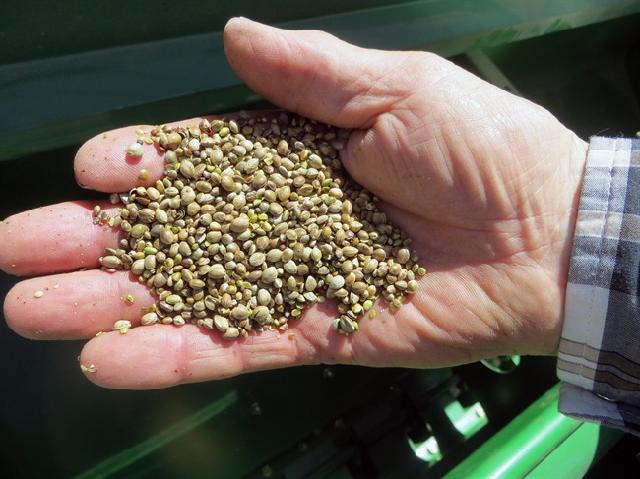 Новости семена конопли куплю марихуану в симферополе