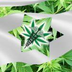 Израиль: большие перспективы рынка марихуаны